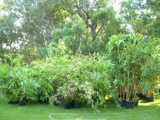 Bamboo Plants for sale at the 17th Annual Texas Bamboo Festival
