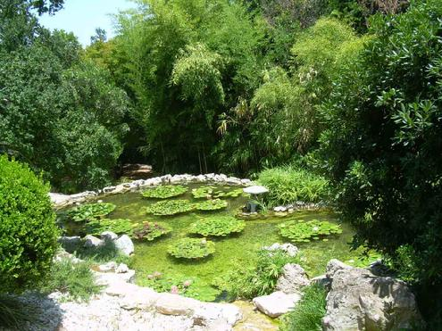 for Japanese pond plants